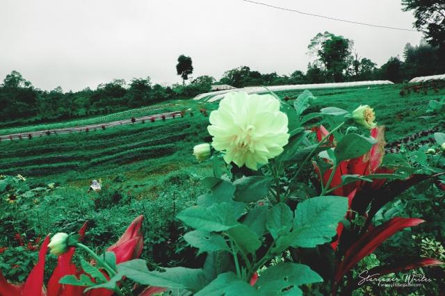 Bemwa flower