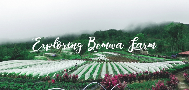 Exploring Bemwa Farm